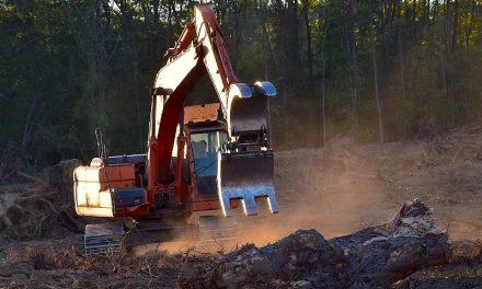 Destinarán a las pymes 10 millones de pesos para la formación en forestación