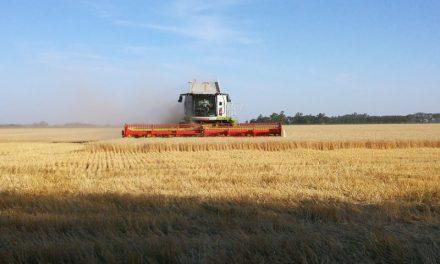 Perspectivas 2019: el agronegocio, con trazo fino