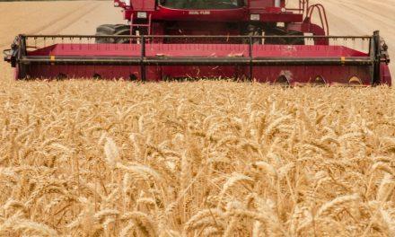 El agro fue el sector que generó la mayor cantidad de empleos genuinos en el último año a pesar de la crisis económica