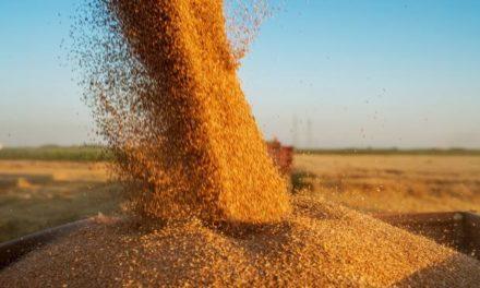 Primer fondo común de inversión para el agro: cuál es el monto mínimo para ingresar