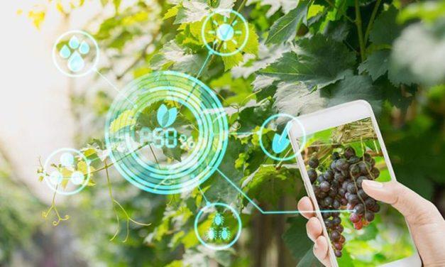 Destacan que los avances tecnológicos representan el 59% del aumento de la producción agrícola