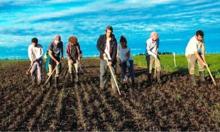 Por qué Épicos, el emprendimiento que promueve la agroecología, puede revolucionar el campo
