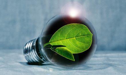 Emprendimientos sustentables que innovan desde el cómo