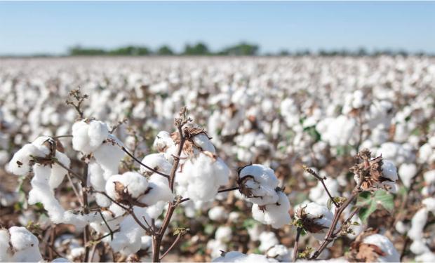 Impulsan un programa de sustentabilidad que puede transformar la industria textil