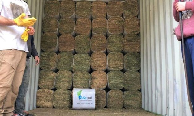 Innovación cordobesa para la exportación de alfalfa
