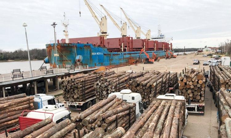 Misiones: PyMEs madereras pedirán a la Nación medidas para regular la exportación de rollos sin procesamiento