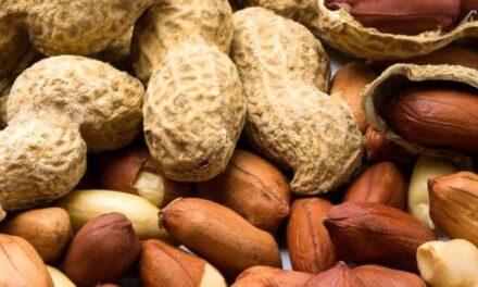 Córdoba alcanza un récord histórico en las exportaciones del maní